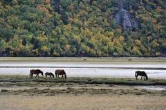 Paarden die dichtbij bergmeer doorbladeren Stock Foto