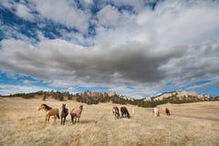 Paarden die dichtbij Fort Robinson State Park, Nebraska weiden royalty-vrije stock afbeelding