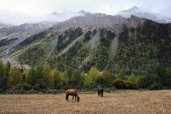 Paarden die door de bergen doorbladeren Stock Foto's