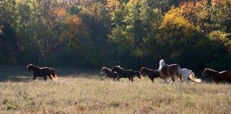 Paarden die in een open weiland lopen Royalty-vrije Stock Foto's