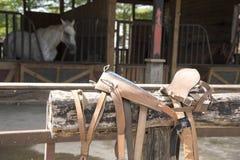 Paarden die gras in het landbouwbedrijf eten Stock Foto