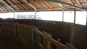 Paarden die in het lopen van oefeningsmachine lopen in stallen stock footage