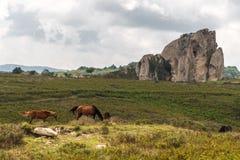 Paarden die in het plateau van Argimusco, in Sicilië, met een natuurlijk megaliet op de achtergrond weiden royalty-vrije stock afbeelding