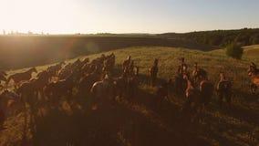Paarden die in langzame motie lopen royalty-vrije stock foto
