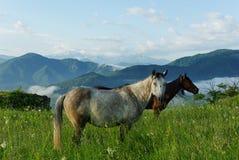 Paarden die op de achtergrond van bergen weiden Stock Fotografie