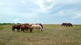 Paarden die op de achtergrond van bewolkte hemel weiden stock footage