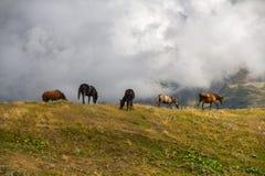 Paarden die op de heuvel weiden Royalty-vrije Stock Afbeelding