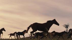 Paarden die op een grasgebied lopen stock video