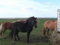Paarden die op een landbouwbedrijf weiden Royalty-vrije Stock Foto
