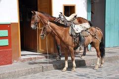 Paarden die op hun ruiters wachten Stock Foto