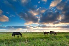 Paarden die op weiland bij zonsondergang weiden Royalty-vrije Stock Fotografie