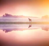 Paarden die op weiland weiden Stock Afbeeldingen