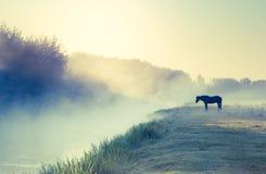 Paarden die op weiland weiden Stock Foto