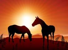 Paarden die op zonsondergangachtergrond weiden Royalty-vrije Stock Foto