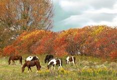 Paarden die scène weiden stock afbeelding
