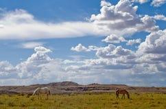 Paarden die in Utah dichtbij het Vier Hoekengebied weiden van de V.S. Royalty-vrije Stock Foto