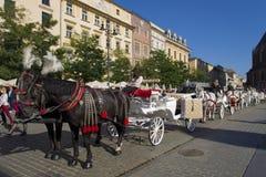 Paarden die vervoer in Krakau trekken Stock Foto