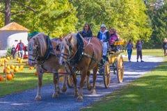 Paarden die Wagen trekken stock afbeelding