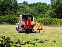 Paarden door aanhangwagen Stock Afbeelding