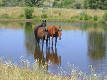 Paarden door Drie royalty-vrije stock fotografie