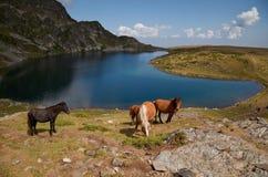 Paarden door het Rila bergenmeer Royalty-vrije Stock Fotografie