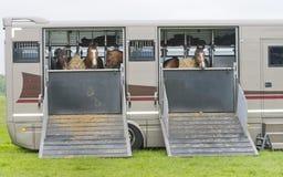 Paarden in een aanhangwagen royalty-vrije stock afbeelding