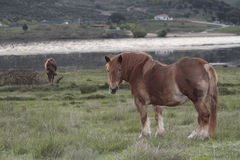 Paarden in een landbouwbedrijf Royalty-vrije Stock Afbeelding