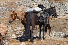 Paarden en bergen. Stock Afbeeldingen