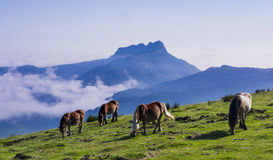 Paarden en bergen in het natuurreservaat van Aiako Harria Royalty-vrije Stock Fotografie