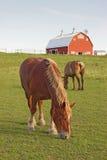 Paarden en een schuurverticaal Royalty-vrije Stock Foto