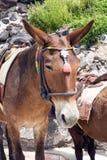 Paarden en ezels op het Eiland Santorini - het traditionele vervoer voor toeristen Dieren op de treden die tot oud leiden royalty-vrije stock afbeeldingen