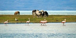 Paarden en Flamingo Stock Fotografie