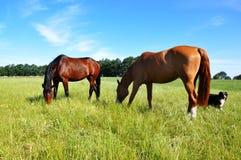 Paarden en Hond Royalty-vrije Stock Afbeelding