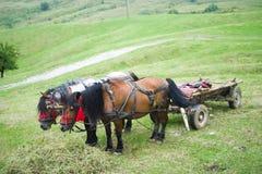 Paarden en kar Royalty-vrije Stock Afbeeldingen