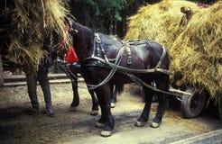 Paarden en kar met hooi Royalty-vrije Stock Afbeelding