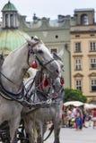 Paarden en karren op de markt in Krakau, Polen royalty-vrije stock foto