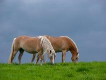 Paarden en Onweerswolken Stock Afbeeldingen