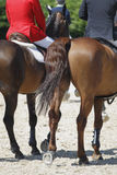 Paarden en raiders Royalty-vrije Stock Afbeeldingen