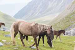 Paarden en veulen Royalty-vrije Stock Afbeelding