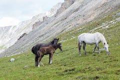 Paarden en veulen Royalty-vrije Stock Afbeeldingen