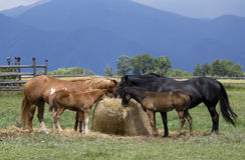 Paarden en veulennen Royalty-vrije Stock Foto