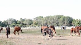 Paarden en veulennen stock footage