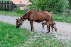 Paarden` familie Stock Foto