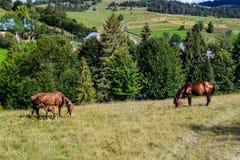 Paarden` familie stock foto's