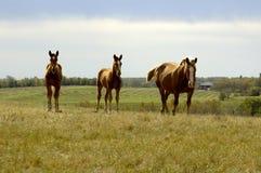Paarden Familie op Heuvel Royalty-vrije Stock Afbeeldingen