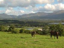 Paarden, gras en meren in Killarney, Ierland Stock Foto's