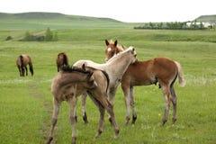 Paarden in groen weiland Stock Foto