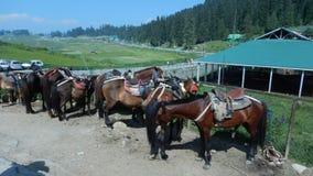 Paarden in Gulmarg Royalty-vrije Stock Fotografie