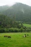 Paarden in het graslandbouwbedrijf in SHANGRI-LA Royalty-vrije Stock Foto's