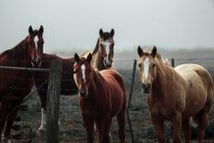 Paarden het Letten op stock afbeelding